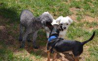dogs-outside